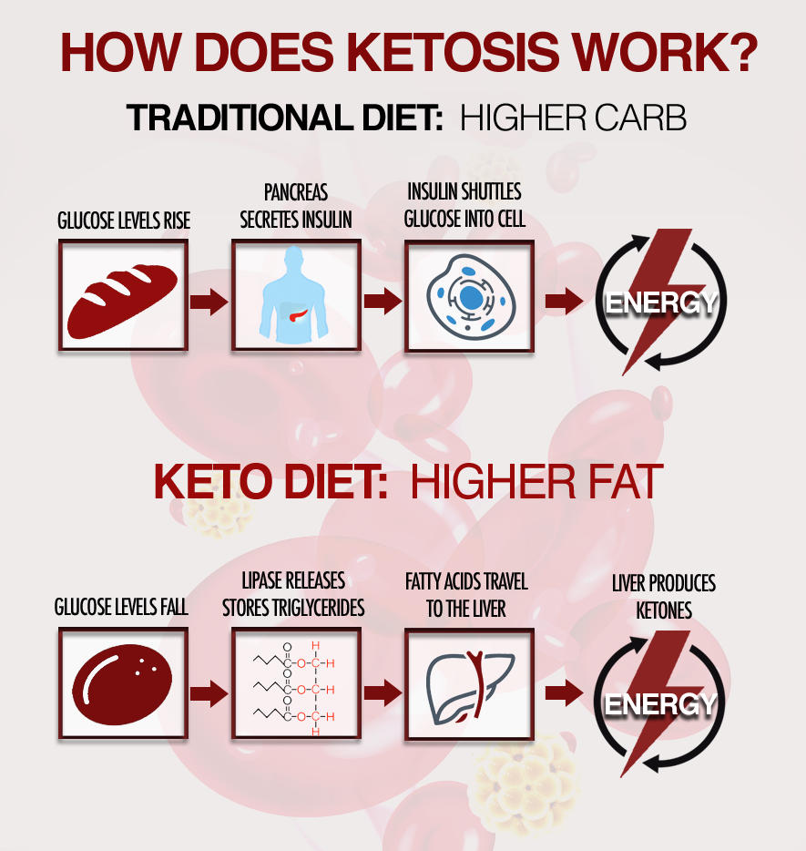KETOSIS_HowItWorksInfographic1